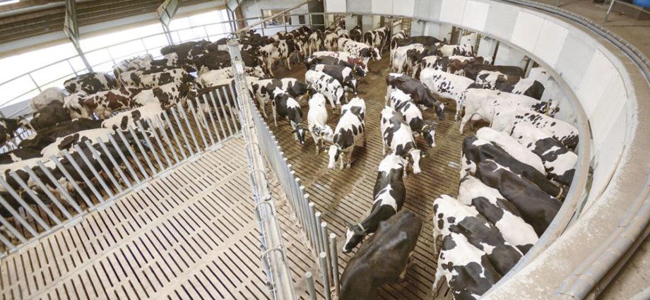 Автоматизация содержания животных